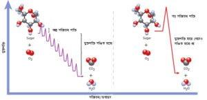 SugarOxidation_bn