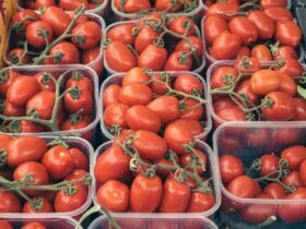 red tomatoes in blue plastic crate