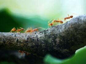 macro photo of five orange ants